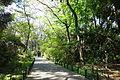 Walkway - Institute for Nature Study, Tokyo - DSC02074.JPG