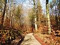 Wanderweg im Naturpark Schönbuch - panoramio (1).jpg
