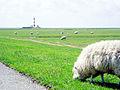 Westerhever 2004 a.jpg
