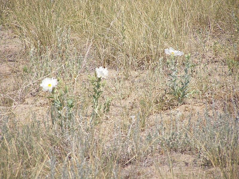 File:Wildflower P7180311.jpg