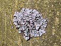 Winter lichen.jpg