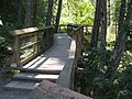 Wittys Lagoon park trail boardwalk. READ INFO IN PANORAMIO-COMMENTS - panoramio.jpg