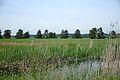 Wollmatinger Ried 2015 mit Fluss.jpg