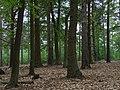 Woodland near Yateley Common - geograph.org.uk - 170507.jpg