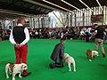 World Dog Show, Amsterdam, 2018 - 12.JPG
