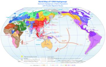 wiki modern human migration