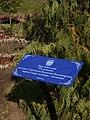 Yaroslavl park 1000 tree.jpg