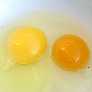 Free-range eggs - Photograph of two hen egg yolks, one from a commercial egg operation and one from a free-range backyard hen. The yolk of the backyard egg is bright orange.