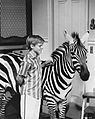 Zebra in the Kitchen Jay North 1965.jpg