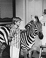 Zebra in the Kitchen Jay North 1965.jpg