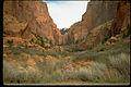 Zion National Park ZION9547.jpg