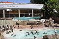 Zoo w Antwerpii-karmienie pingwinow.JPG