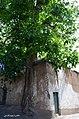 (((شهمیرزاد و درختهای گردو ))) - panoramio (4).jpg