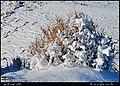 (((مناظر اطراف روستای تازه کند سفلی مراغه))) - panoramio.jpg