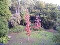 Árboles en los alrededores-arboretum lussich.JPG