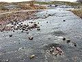 Älvkvarnsförekomst (skålgrop, hällristning), Tornby, Linköping, Östergötland.jpg
