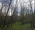 Долина реки Бурункуля (3) Старая дорога - panoramio.jpg
