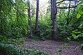 Колекція лісовода Вінтера DSC 0049.jpg