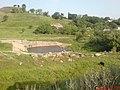 Народ купается в отстойнике - panoramio.jpg