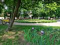 Парк-сквер на площі Соборній.jpg