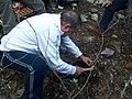 Подготовка гербария в национальном парке (Турция)-01.JPG