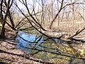 Правобережная старица реки Яузы с фрагментом низкой поймы.jpg