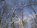 Украина, Киев - Голосеевский лес 166.jpg