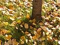 Хордовый проезд. Листья на траве - panoramio.jpg