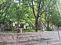 کوچه باغ های روستای رویین.jpg