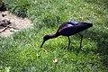 گونه های مختلف از پرنده، در باغ پرندگان شهر اصفهان - ایران 01.jpg
