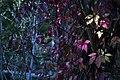 گیاهان در پاییز - باغ بوتانیکال تفلیس 18.jpg