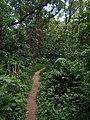 义务植树基地步道 - Voluntary Tree Planting Station Trail - 2015.07 - panoramio (1).jpg