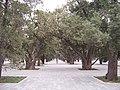 太庙 - panoramio.jpg