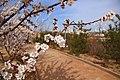 榆溪河畔风光 - panoramio.jpg