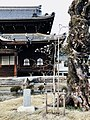 正永寺の2代目の桜.jpg