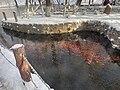 水磨沟的鱼.jpg