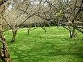 清大梅園 Dr.Mei Memorial Garden - panoramio.jpg