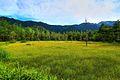 田代湿原 - panoramio (1).jpg