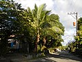 0160 jfFarms Pulo Roads Talacsan San Rafael Bulacanfvf 06.JPG