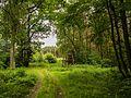 030 Lasy w okolicach Wawelna.jpg