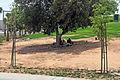 13-08-06-abu-dhabi-by-RalfR-042.jpg