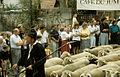 1990 Schäferlauf Schafe im Festzug.jpg