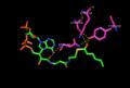 2,4 Hexadienoyl-CoA with DECR1.png