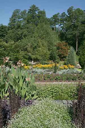 Sarah P. Duke Gardens - Image: 2008 07 24 Rows of flowers at Duke Gardens