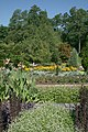 2008-07-24 Rows of flowers at Duke Gardens.jpg