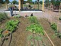 2009 community garden Colorado 3721324026.jpg