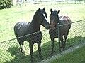 2010-05-25-Pferde-1.JPG
