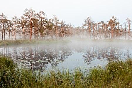 20120630-04(Skaista ezers, Cenas tīrelis).jpg