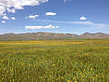 2014-06-24 11 24 34 Meadows along the Bruneau River south of Charleston, Nevada.JPG