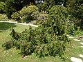 2015-05-27 Paris, Jardin des plantes 08.jpg